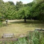 huge fully maintained garden / orchard, student house, Kenilworth,